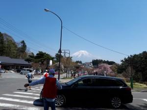 本栖湖で1000円札裏のモデルとなった富士山の絶景、今年はスマホ持参で走ったに関わらず撮りそびれ、替わりに本栖湖から一路ゴール付近で我慢。5lakesでしかコースになってない、お気に入りの静寂な湖。おトイレ探してて写真どこではなかったのです。
