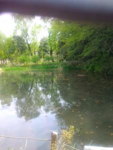 国分寺から母のお墓へ向かう途中、姿見の池。桜は若葉に変わってた。