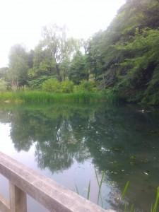 帰りに通った母のお墓のそばの池。今日は誰もいない。静寂な初夏