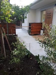 開院のお祝いのオリーブや胡蝶蘭、妹夫婦メインに地植しました!胡蝶蘭、咲いたら見もの。うまくやれば成功するらしい?