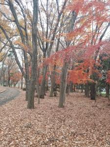 クリスマスの喧騒離れ、ここにも赤。平成最後の紅葉?静かな時が流れてた
