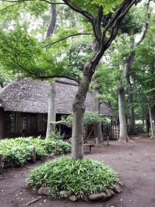徳冨蘆花の旧居。うっそうと繁る公園内に。静かな気持ちになります…