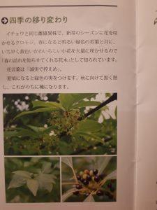 こういう植物です。